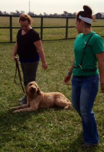 Private professional dog training in obedience and behavior problem solving